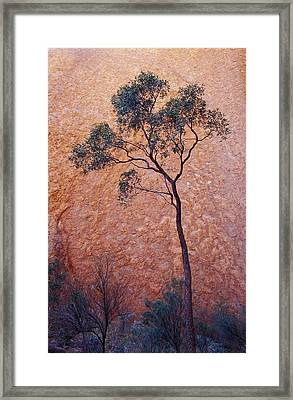 A Desert Bloodwood Tree Against The Red Framed Print by Jason Edwards