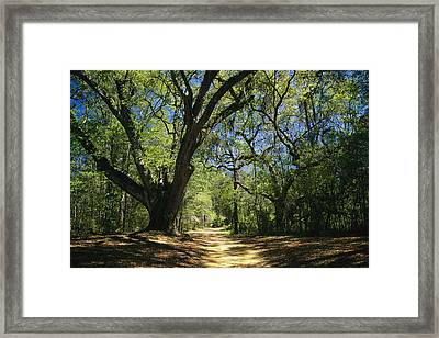 A Dirt Road Through A Forest Passes Framed Print by Raymond Gehman