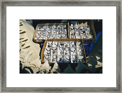 A Display Of Shark Tooth Jewelry Framed Print by Clarita Berger