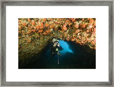 A Diver Explores A Cavern With Orange Framed Print
