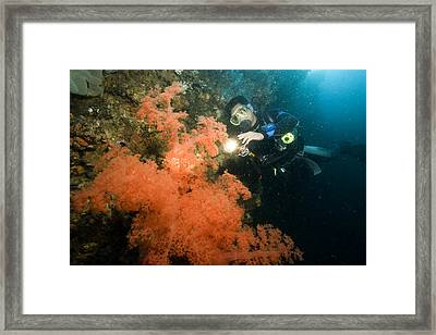 A Diver Looking At A Large Soft Coral Framed Print