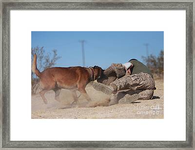 A Dog Handler Works On Take-down Framed Print by Stocktrek Images