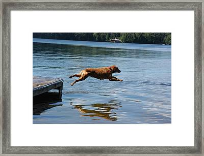 A Dog Jumps Into A Lake Chasing A Ball Framed Print