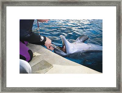 A Dolphin Has Its Teeth Cleaned Framed Print by Clarita Berger