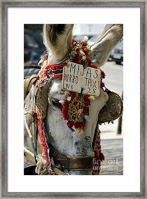 A Donkey Taxi In A Village Of Spain Framed Print by Perry Van Munster