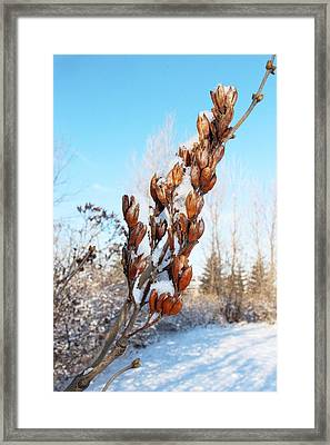 A Dose Of Winter Framed Print