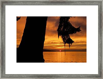 A Douglas Fir Stands Silhouetted Framed Print by Taylor S. Kennedy