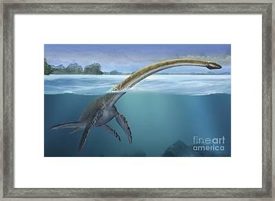 A Elasmosaurus Platyurus Swims Freely Framed Print by Sergey Krasovskiy