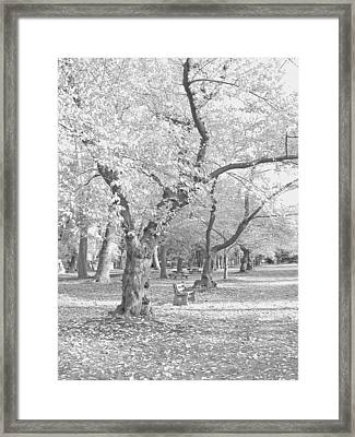 A Fall Day In Black And White Framed Print