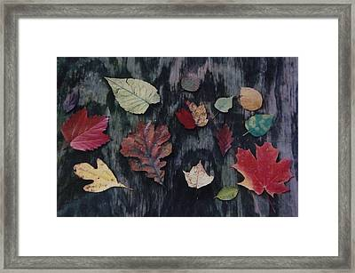 Framed Print featuring the photograph A Fall Of Color by Gerald Strine