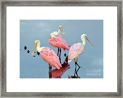 A Family Gathering Framed Print by Kathy Baccari