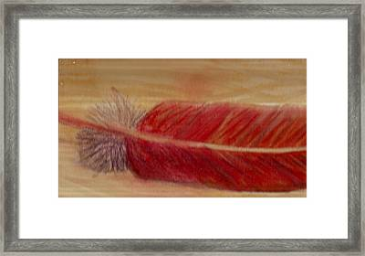 A Feather I Found Framed Print by Anne-Elizabeth Whiteway
