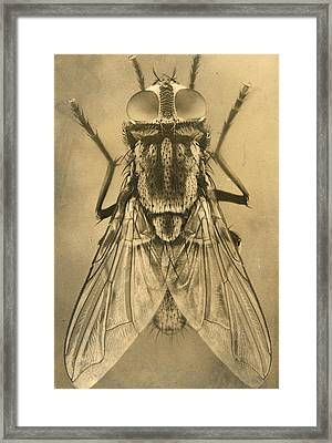 A Female House Fly Resting On Glass Framed Print by N.A. Cobb