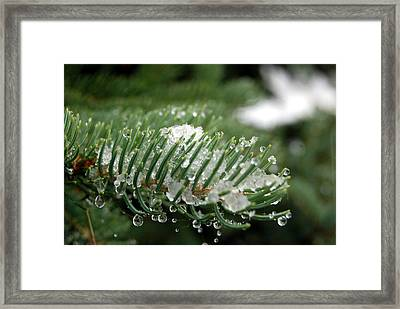 A First Snowfall Framed Print