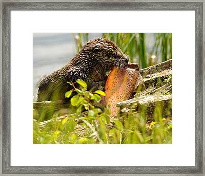 A Fish Story Framed Print by Amy Gerber