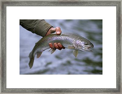 A Fisherman Holding A Rainbow Trout Framed Print by Michael Melford