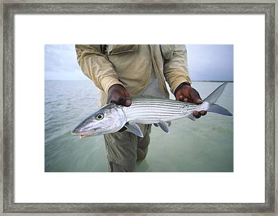 A Fisherman Holds Out A Bonefish Framed Print