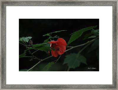Framed Print featuring the photograph A Flame Among The Darkness by Amy Gallagher