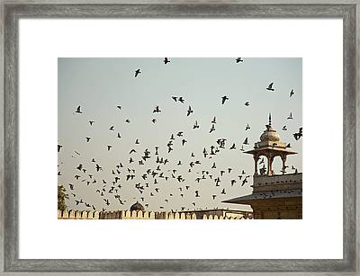 Framed Print featuring the photograph A Flock Of Pigeons Crowding One Of The Structures On Top Of The Red Fort by Ashish Agarwal
