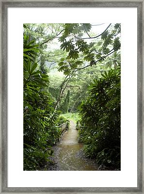 A Flooded Path At Manoa Falls Framed Print by Stacy Gold