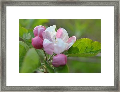 A Flower In The Wild Framed Print by Artie Wallace
