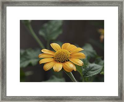 A Flowers Flower Framed Print