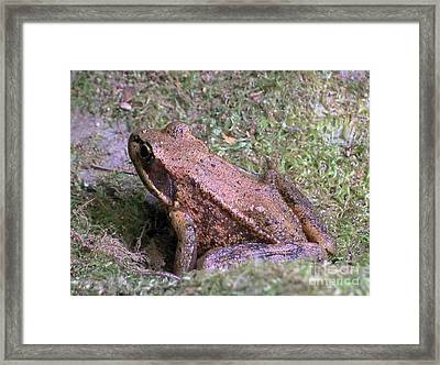 Framed Print featuring the photograph A Friendly Frog by Chalet Roome-Rigdon