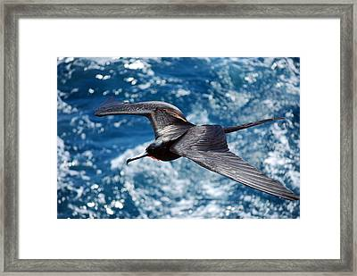 a Frigate in Flight Framed Print