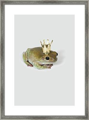 A Frog Wearing A Crown, Studio Shot Framed Print by Paul Hudson
