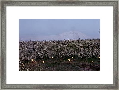 A Fruit Orchard With Smudge Fires Framed Print by Sisse Brimberg