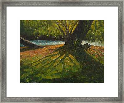 A Gainst The Light. Willow Framed Print