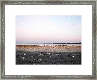 Framed Print featuring the photograph A Gathering On Rehoboth Bay by Pamela Hyde Wilson