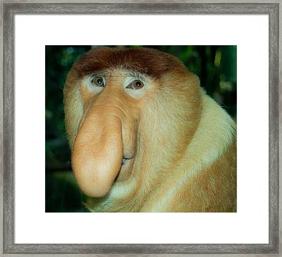 A Gentle Ape Framed Print
