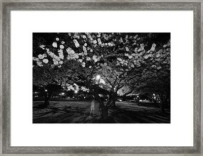 A Ghost In The Cherry Blossoms Framed Print by Shirley Tinkham