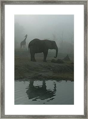 A Giraffe And Elephant Live In The Same Framed Print by Michael Nichols