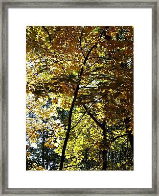 A Glorious Fall Day Framed Print by Will Borden