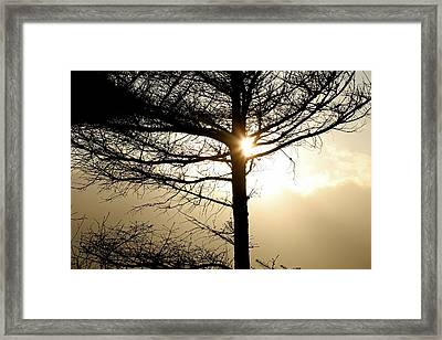 A Golden Day Framed Print by Marie Jamieson