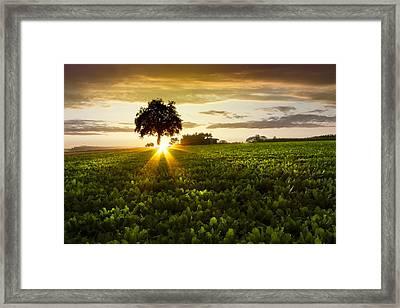 A Golden Evening  Framed Print by Debra and Dave Vanderlaan