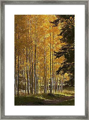 A Golden Trail Framed Print