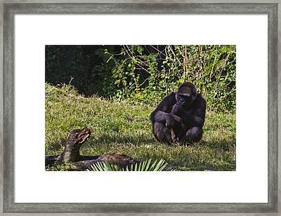 A Gorilla Of One Framed Print by Nicholas Evans