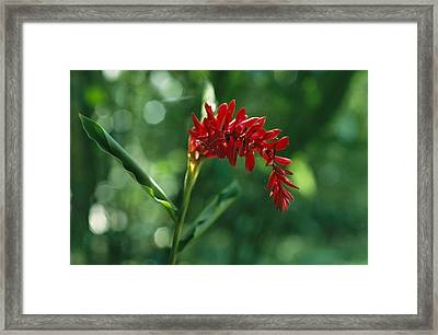 A Gracefully Arching Wildflower Framed Print