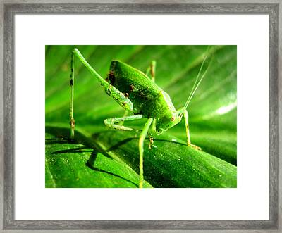 A Grasshopper Cleans Itself Framed Print by Catherine Natalia  Roche