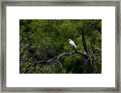 A Great Egret In A Green Forest Framed Print