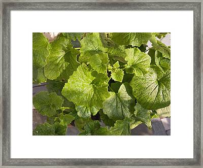 Framed Print featuring the photograph A Green Leafy Vegetable Plant After Watering In Bright Sunrise by Ashish Agarwal