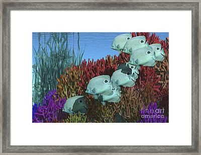 A Group Of Butterflyfish Swim Framed Print