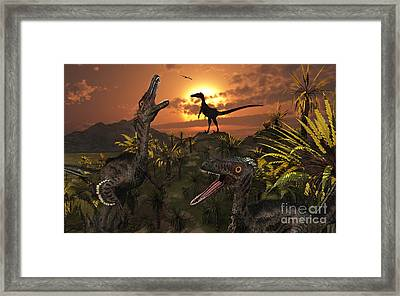A Group Of Feathered Carnivorous Framed Print by Mark Stevenson