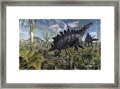 A Group Of Herbivore Stegosaurus Framed Print