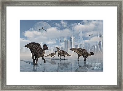 A Group Of Parasaurolophus Duckbill Framed Print by Mark Stevenson