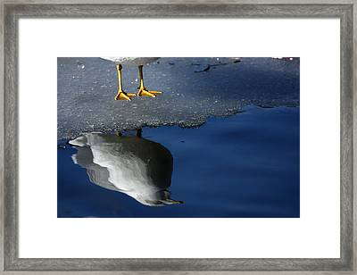 A Gull Reflects Framed Print by Karol Livote