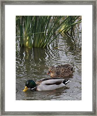 A Handsome Couple Framed Print by Frank Wickham
